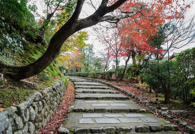 Steps leading up with autumn colored leaves in arashiyama,  kyoto, japan Premium Photo