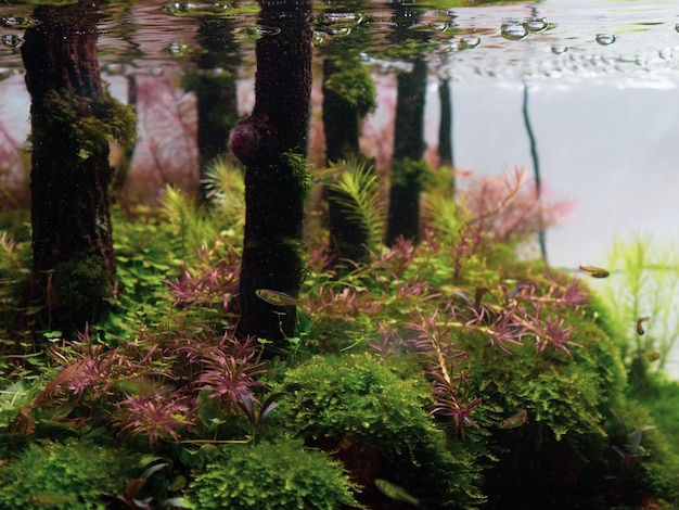 Premium Photo Still Life Close Up Of Beautiful Tropical Aqua Scape