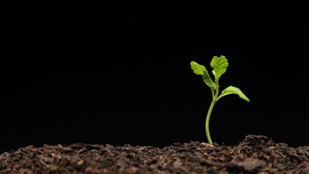Still life of growing seedling Free Photo