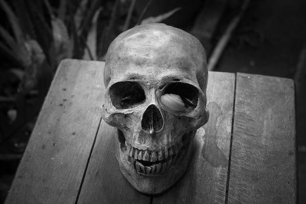 Still life of human skull,halloween concept, close up skull still life style Premium Photo