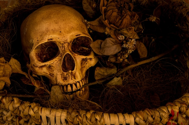 Still life photography with human skull Free Photo
