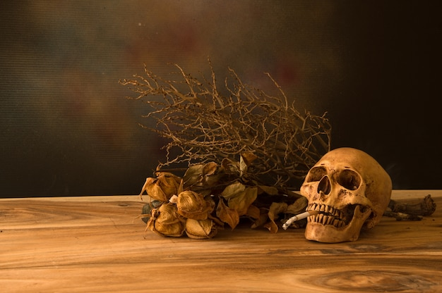 Still life with human skull Free Photo