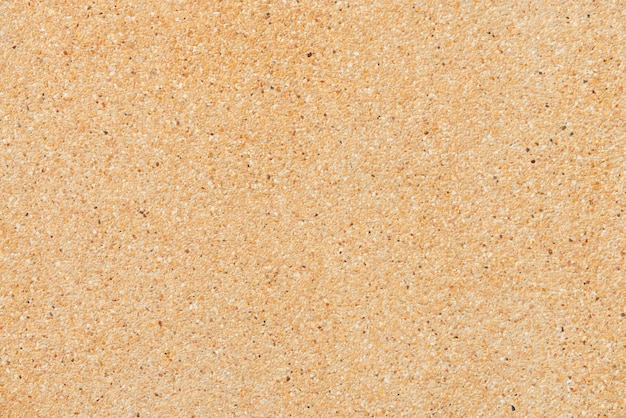 Sand Vectors, Photos and PSD files | Free Download