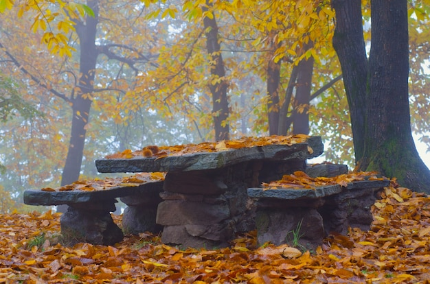 Stone table and benches in a forest surrounded by colorful leaves and trees during the autumn Free Photo