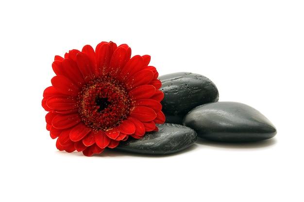 Камни и красный цветок на белом фоне Premium Фотографии