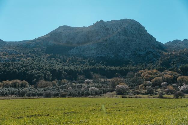 Stony mountain with numerous trees landscape Free Photo