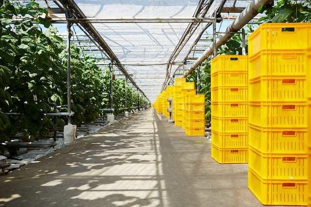 Storage of vegetation Free Photo