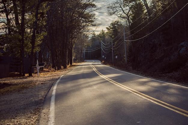 Прямая дорога шоссе, идущая через лес в солнечный день Бесплатные Фотографии