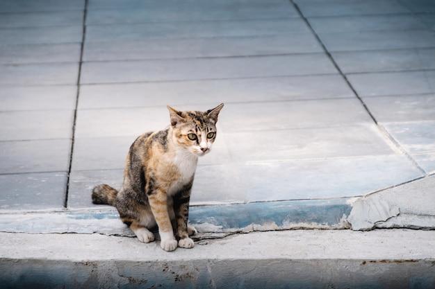 Stray cat in the urban. brown striped cat. cement flooring Premium Photo
