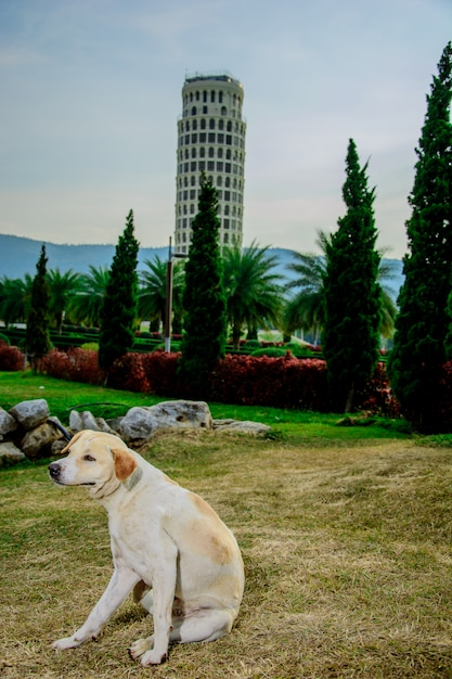 Stray dog in the tourist attractions. Premium Photo