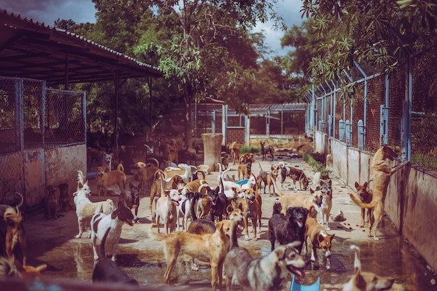 Stray dogs. abandoned homeless stray dogs is lying in the foundation. Premium Photo
