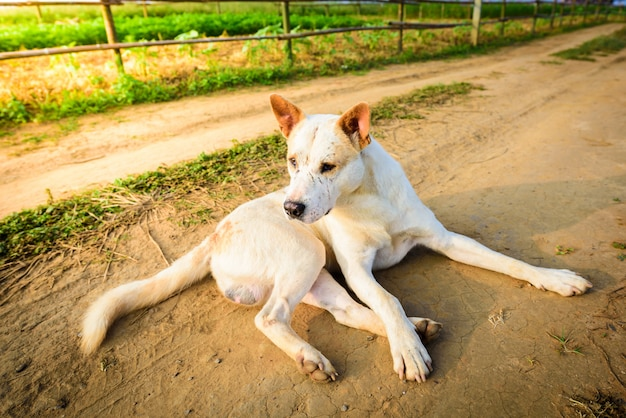 Stray dogs are abandoned lying on roads Premium Photo