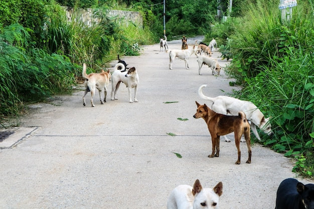 The stray dogs are waiting for food from the people who have passed through the wilderness Premium Photo