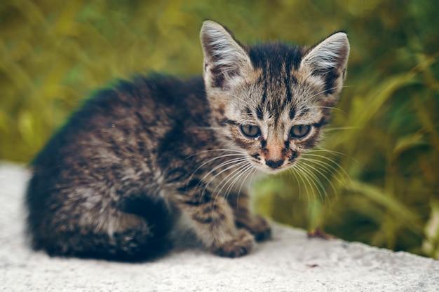 The stray kitten. Premium Photo
