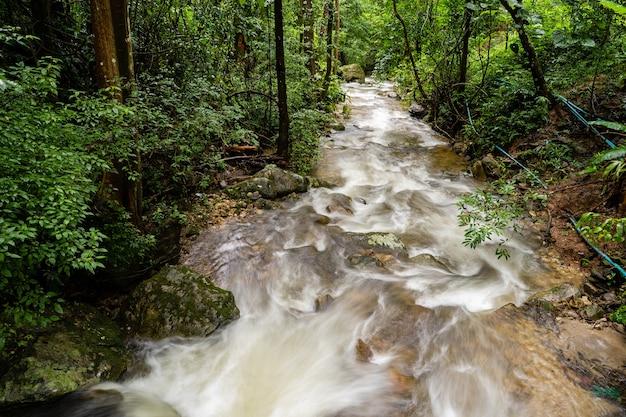 Ручьи в лесу. Premium Фотографии