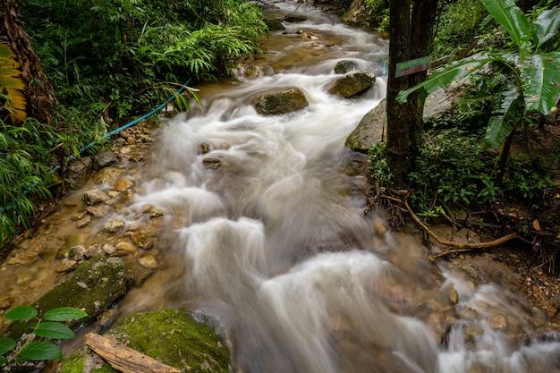 Ручьи с горы в лесу Premium Фотографии