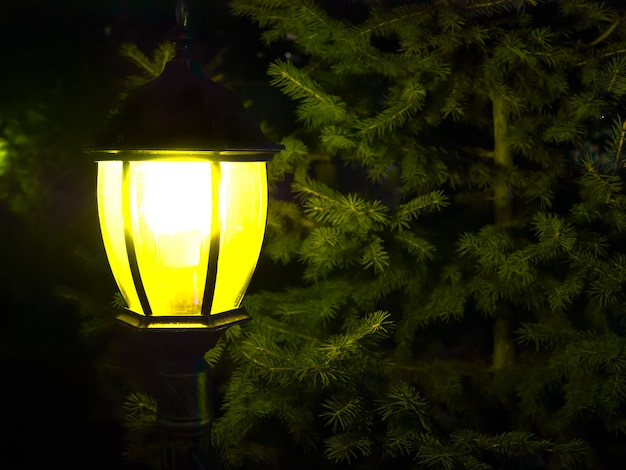 Street vintage lamp with christmas tree in the evening outside Premium Photo