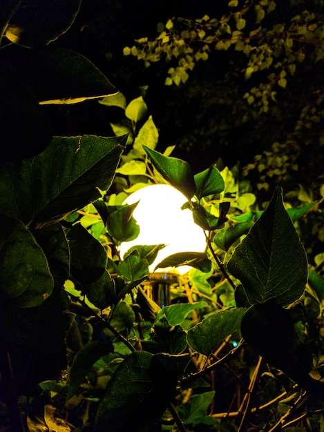 Street vintage lamp with christmas tree in the evening outside. Premium Photo