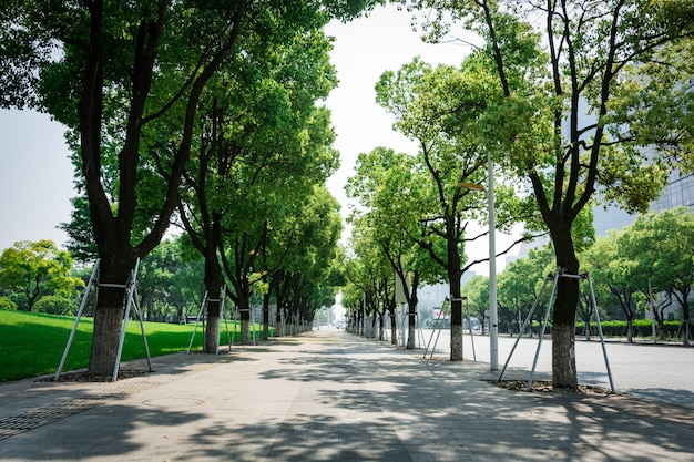 Street with trees Free Photo