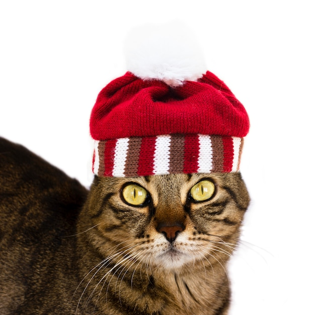 A striped cat with knitted striped hat with pompon looks to the camera. isolated Premium Photo