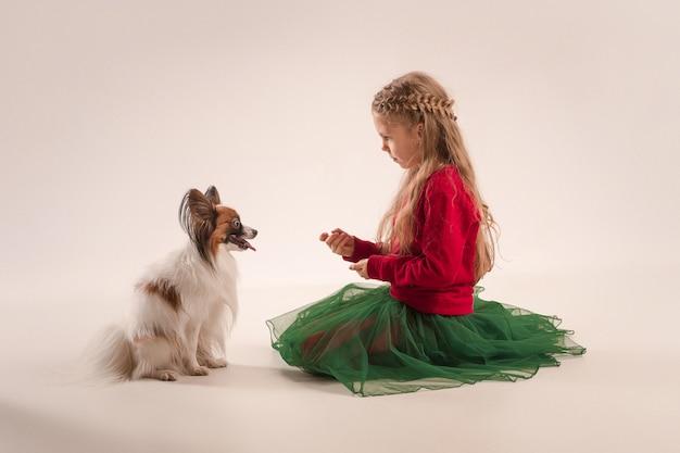 Студийный портрет маленького зевая щенка папийона Бесплатные Фотографии