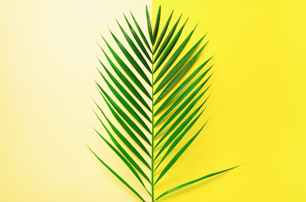 Styled summer concept. tropical palm leaves on yellow and blue background. minimal nature. Premium Photo