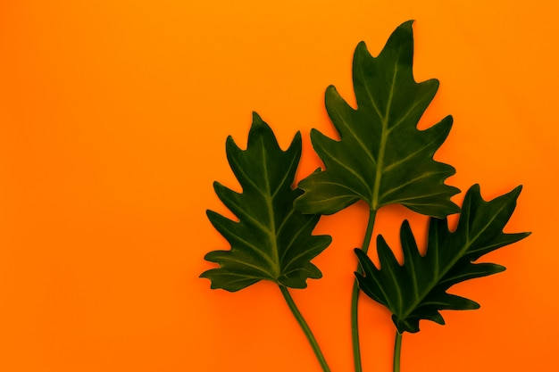 Stylish interior design with tropical green leaves. Premium Photo