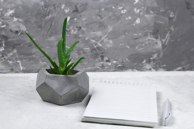 Succulent in a concrete pot and opened notebook with empty sheet Premium Photo