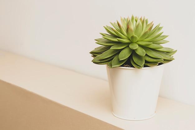 Succulent plant indoor decorative flower pots Premium Photo
