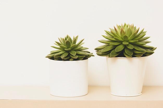 Premium Photo Succulent Plant Indoor Decorative Flower Pots