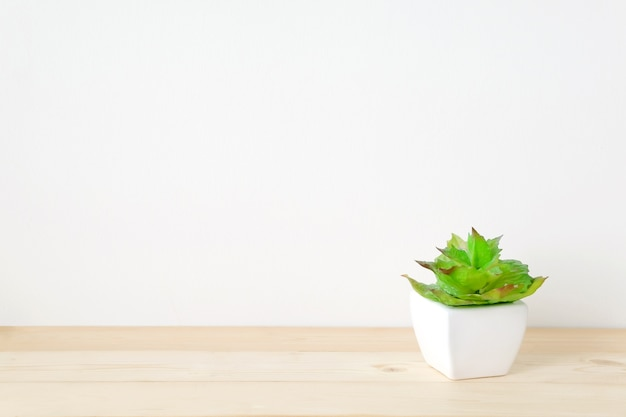 Succulent Plant On Wood Table Over White Cement Wall Background Premium  Photo
