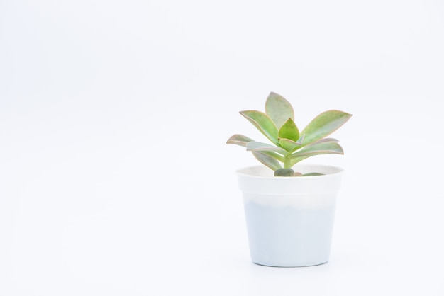 A succulent plant potted Free Photo