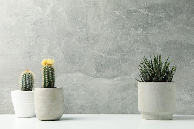 Succulent plants against grey surface. houseplants Premium Photo