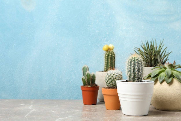Succulent plants on grey table. houseplants Premium Photo