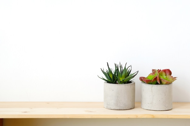 Succulent Plants On Wood Table Over White Cement Wall Background Premium  Photo
