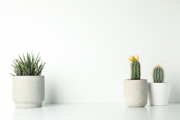 Succulent plants in pots on white background, space for text Premium Photo