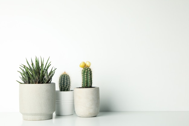 Succulent plants in pots on white surface Premium Photo