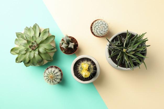 Succulent plants on two tone surface Premium Photo