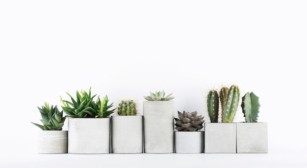 Succulents and cactus in a concrete pots on a white bedside table Premium Photo