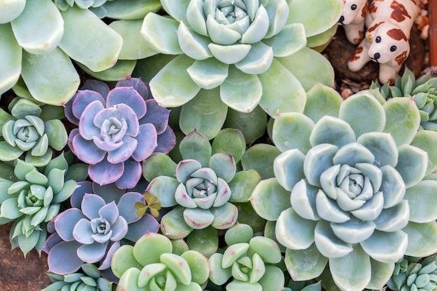 Succulents or cactus in desert botanical garden for decoration and agriculture design. Premium Photo
