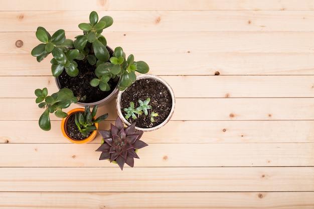 Succulents, house plants in pots Premium Photo