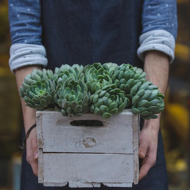 Suculentusの木製バスケットを保持している男性の花屋 無料写真