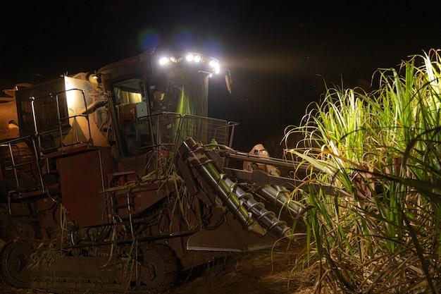 Sugar cane hasvest plantation night Premium Photo