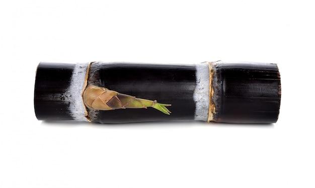 Sugar cane isolated on white Premium Photo