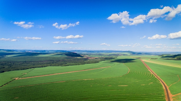 Sugarcane plantation field aerial view with sun light. agricultural industrial. Premium Photo