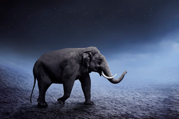 Sumatran elephant walk on the desert Premium Photo