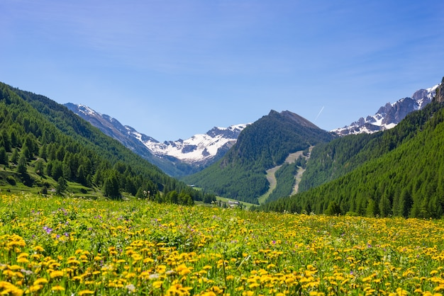 Summer in the alps. blooming alpine meadow and lush green woodland Premium Photo