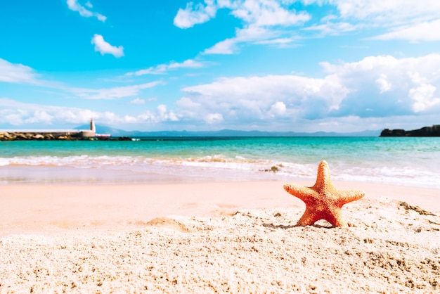 Summer beach with starfish Free Photo