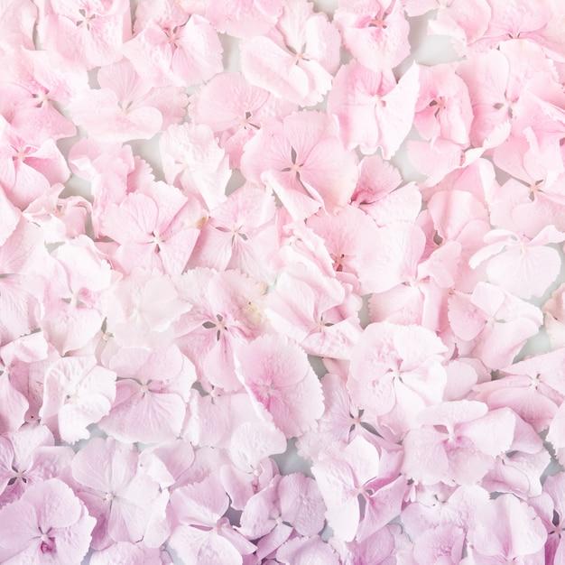 Summer blossoming delicate pastel pink flowers petals Premium Photo