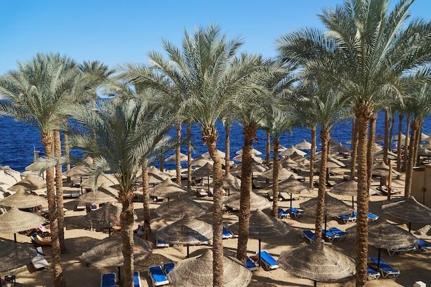 ホテルの砂浜のビーチとヤシの木の傘の下で夏の長椅子。 Premium写真